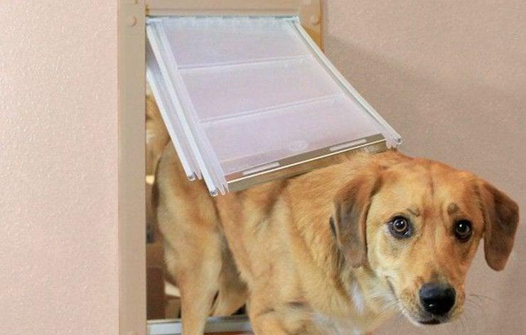 Happy dog going through a pet door | Demers Glass AZ