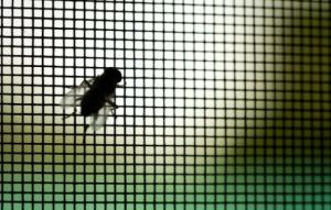 Fly on insect screen - Demers Glass AZ